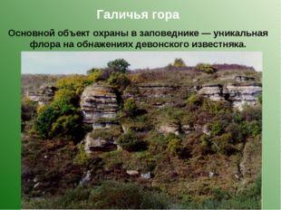 Галичья гора Основной объект охраны в заповеднике — уникальная флора на обнаж