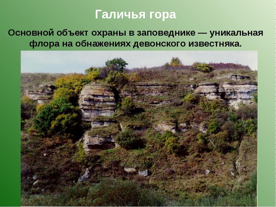 Галичья гора Основной объект охраны в заповеднике — уникальная флора на обнаж...