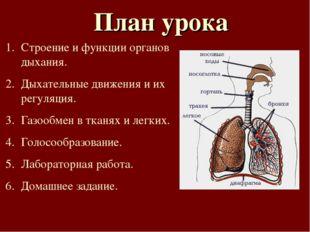 План урока Строение и функции органов дыхания. Дыхательные движения и их регу