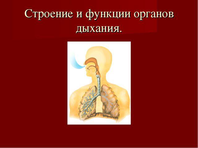 Строение и функции органов дыхания.