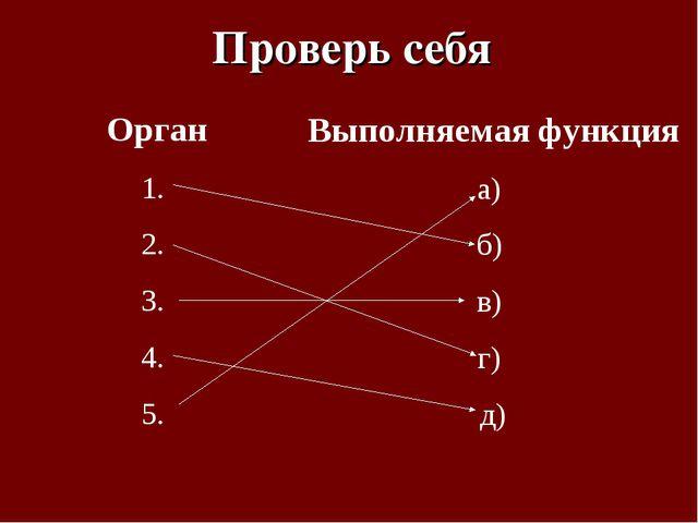 Орган 1. 2. 3. 4. 5. Выполняемая функция а) б) в) г) д) Проверь себя