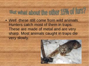 Well -these still come from wild animals. Hunters catch most of them in traps
