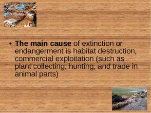 The main cause of extinction or endangerment is habitat destruction, commerci