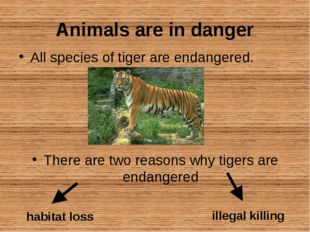 Animals are in danger All species of tiger are endangered. There are two reas