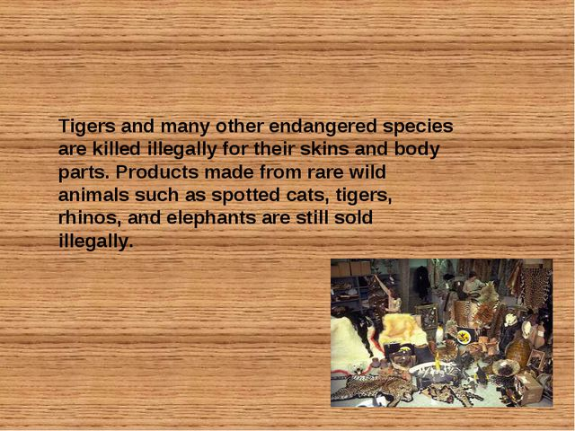 Tigers and many other endangered species are killed illegally for their skins...