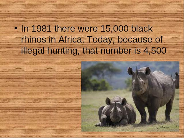 In 1981 there were 15,000 black rhinos in Africa. Today, because of illegal h...