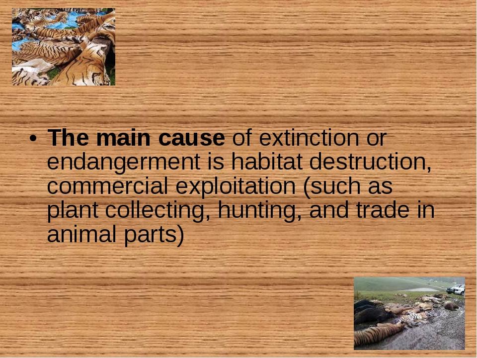 The main cause of extinction or endangerment is habitat destruction, commerci...