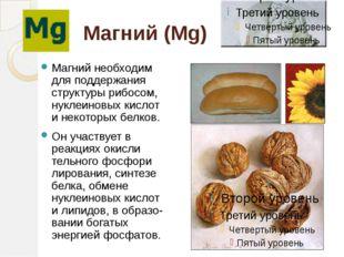 Магний (Mg) Магний необходим для поддержания структуры рибосом, нуклеиновых