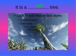 It is a ................ tree. tall