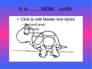 It is .................. turtle. slow