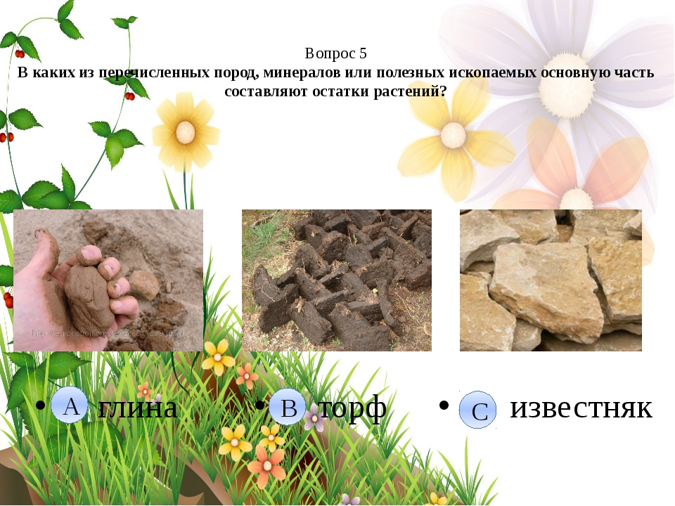 Вопрос 5 В каких из перечисленных пород, минералов или полезных ископаемых о...