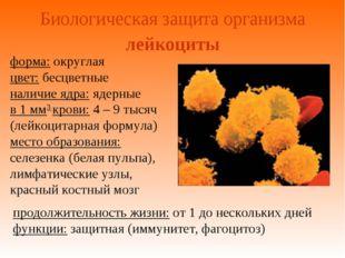 Биологическая защита организма форма: округлая цвет: бесцветные наличие ядра: