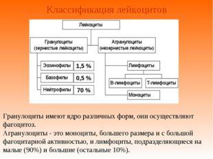 Классификация лейкоцитов Гранулоциты имеют ядро различных форм, они осуществл