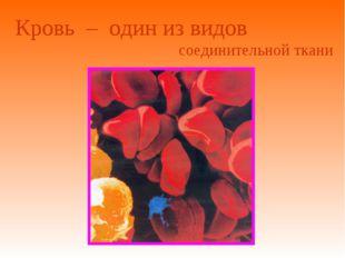 Кровь – один из видов соединительной ткани