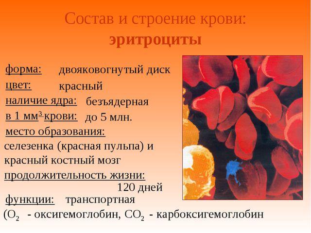 Состав и строение крови: эритроциты двояковогнутый диск красный безъядерная д...