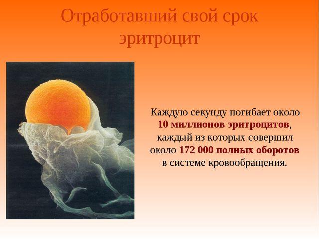 Отработавший свой срок эритроцит Каждую секунду погибает около 10 миллионов э...