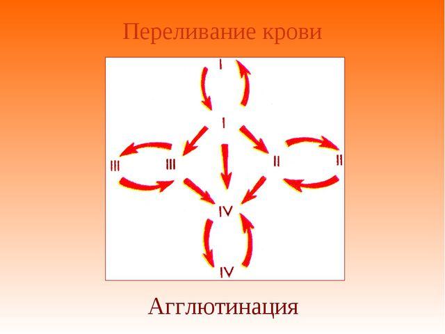Переливание крови Агглютинация