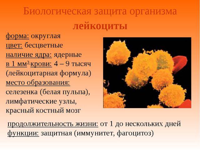Биологическая защита организма форма: округлая цвет: бесцветные наличие ядра:...