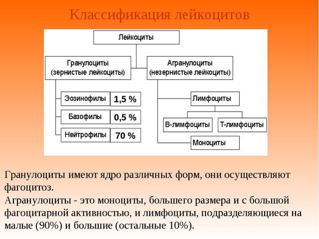 Классификация лейкоцитов Гранулоциты имеют ядро различных форм, они осуществл...