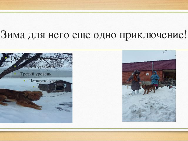 Зима для него еще одно приключение!