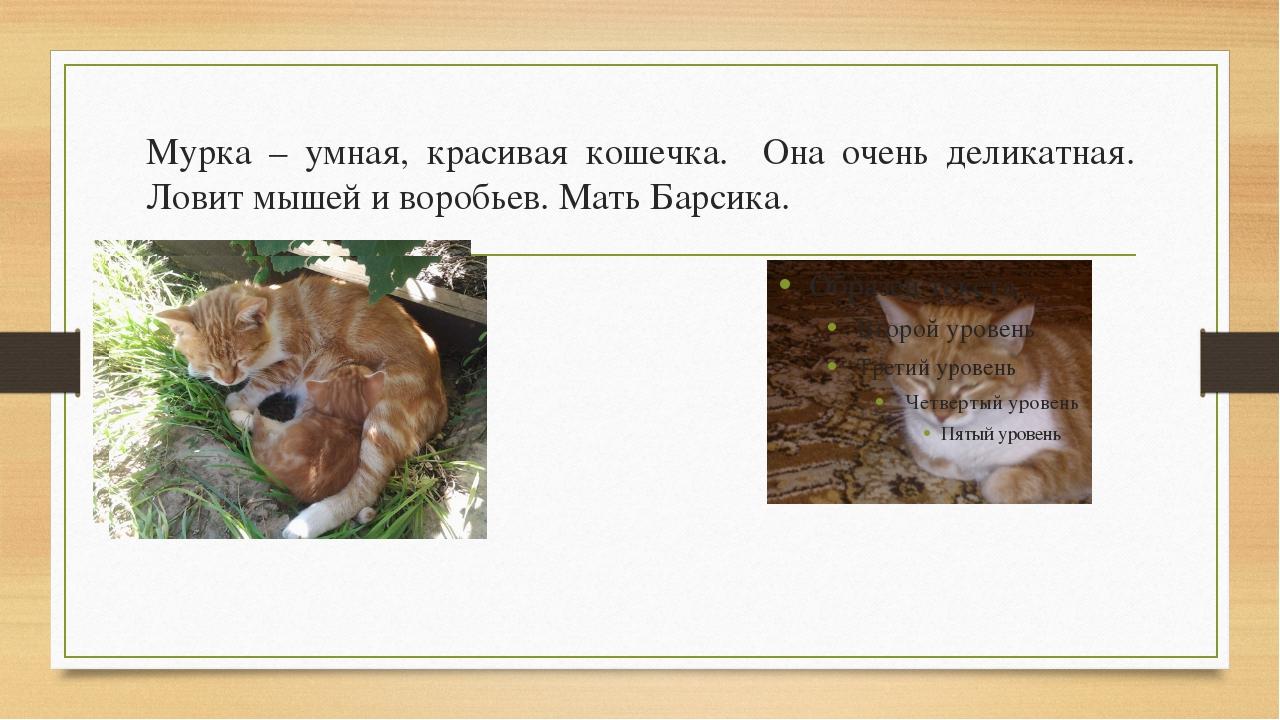 Мурка – умная, красивая кошечка. Она очень деликатная. Ловит мышей и воробьев...