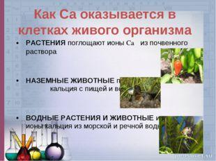 РАСТЕНИЯ поглощают ионы Ca из почвенного раствора НАЗЕМНЫЕ ЖИВОТНЫЕ получают
