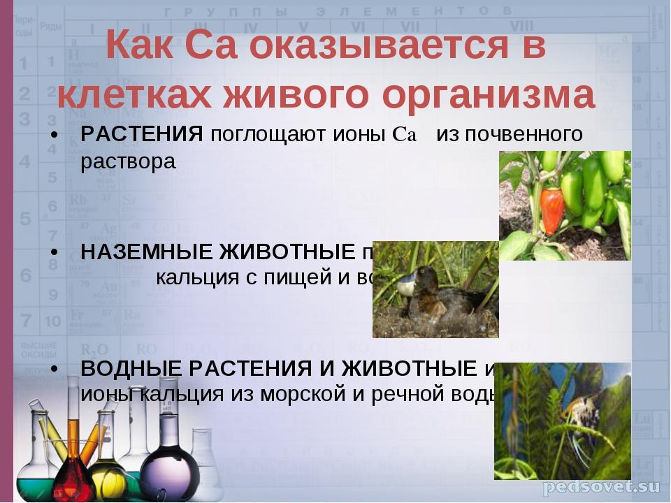 РАСТЕНИЯ поглощают ионы Ca из почвенного раствора НАЗЕМНЫЕ ЖИВОТНЫЕ получают...