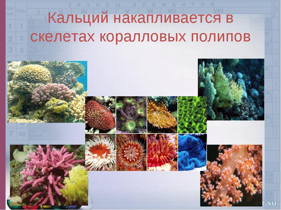 Кальций накапливается в скелетах коралловых полипов