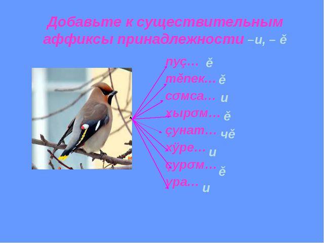 Добавьте к существительным аффиксы принадлежности –и, – ě пуç… тĕпек… сǎмса…...