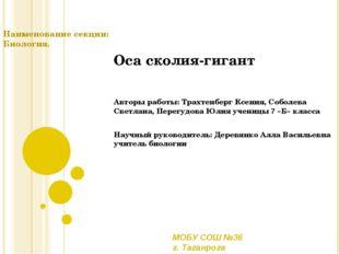 Оса сколия-гигант Авторы работы: Трахтенберг Ксения, Соболева Светлана, Перег