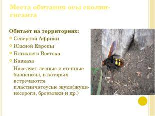 Места обитания осы сколии-гиганта Обитает на территориях: Северной Африки Южн