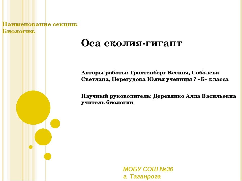 Оса сколия-гигант Авторы работы: Трахтенберг Ксения, Соболева Светлана, Перег...