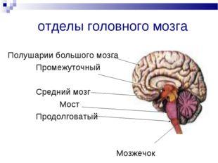 отделы головного мозга Полушарии большого мозга Промежуточный Средний мозг Мо