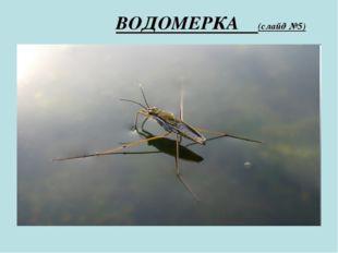 ВОДОМЕРКА (слайд №5)