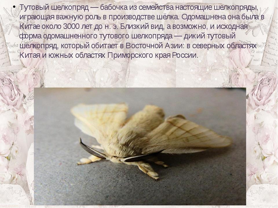 Тутовый шелкопряд— бабочка из семейства настоящие шелкопряды, играющая важну...