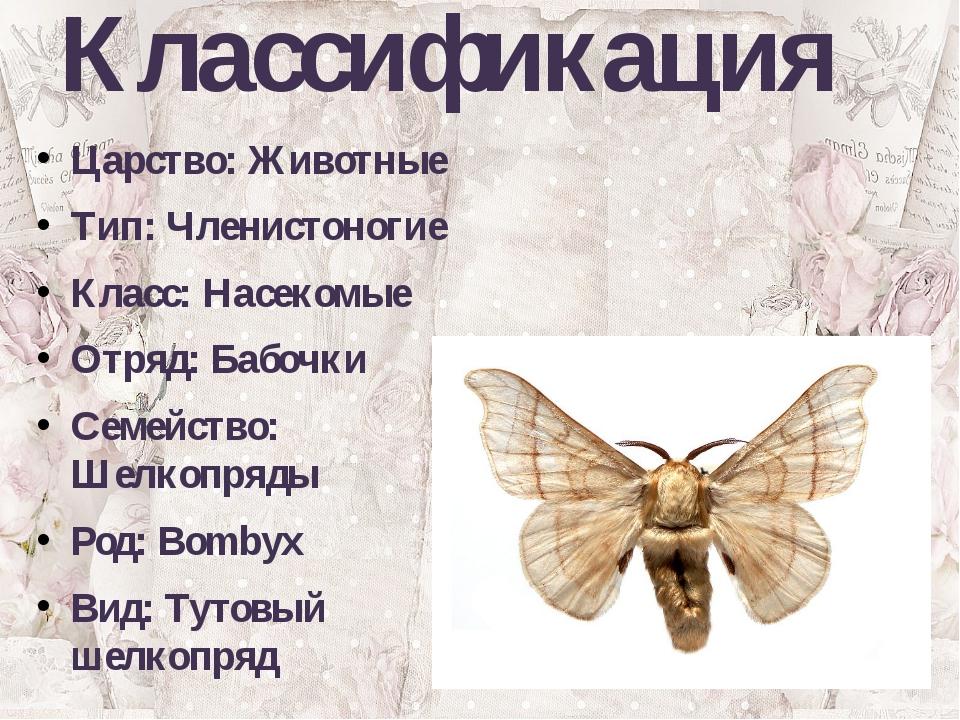 Классификация Царство: Животные Тип: Членистоногие Класс: Насекомые Отряд: Ба...