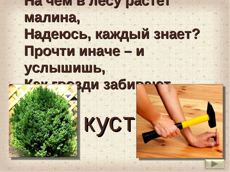 На чём в лесу растёт малина, Надеюсь, каждый знает? Прочти иначе – и услышишь...