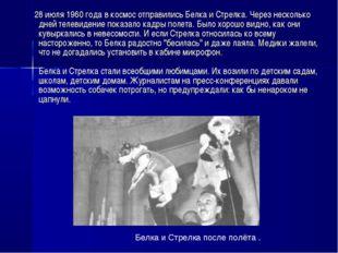 28 июля 1960 года в космос отправились Белка и Стрелка. Через несколько дней