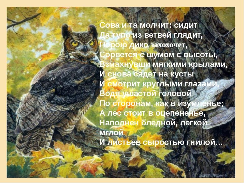 Сова и та молчит: сидит Да тупо из ветвей глядит, Порою дико захохочет, Сорве...