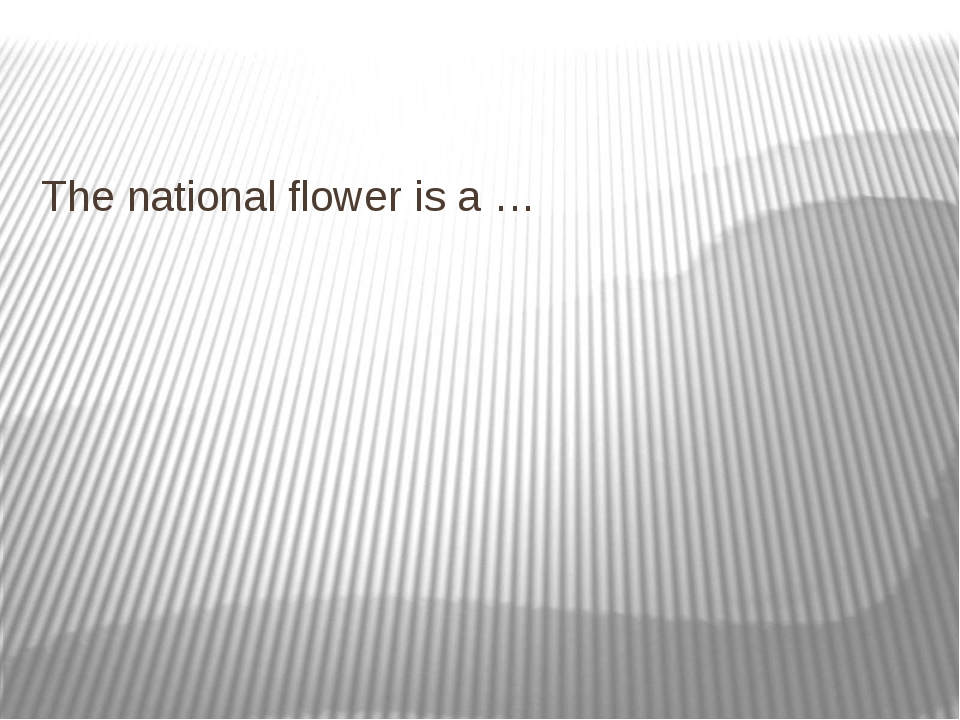 The national flower is a …