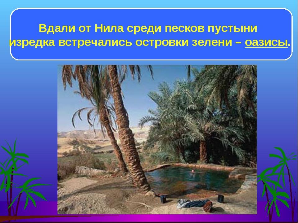Вдали от Нила среди песков пустыни изредка встречались островки зелени – оази...