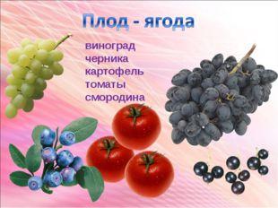 виноград черника картофель томаты смородина