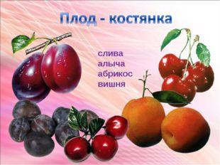 слива алыча абрикос вишня