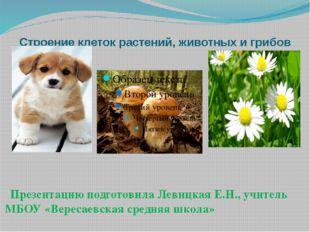 Строение клеток растений, животных и грибов Презентацию подготовила Левицкая