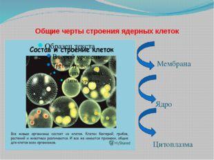 Общие черты строения ядерных клеток Мембрана Ядро Цитоплазма