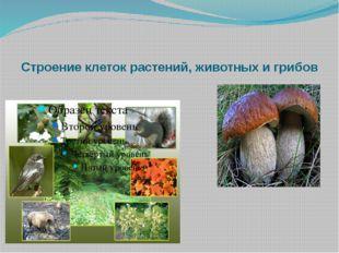 Строение клеток растений, животных и грибов