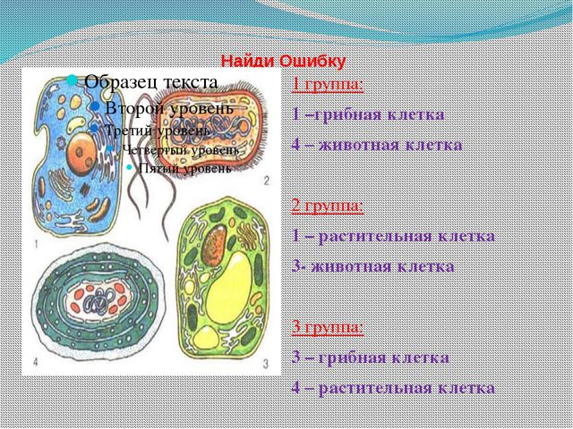 Найди Ошибку 1 группа: 1 –грибная клетка 4 – животная клетка 2 группа: 1 – р...