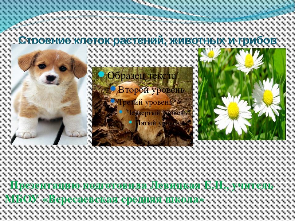 Строение клеток растений, животных и грибов Презентацию подготовила Левицкая...