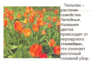 Тюльпан – растение семейства Лилейные. Название цветка происходит от персидс
