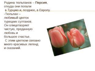 Родина тюльпанов – Персия, откуда они попали в Турцию и, позднее, в Европу. -